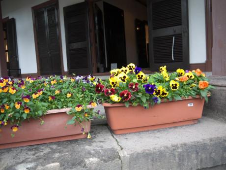 20120731_flower