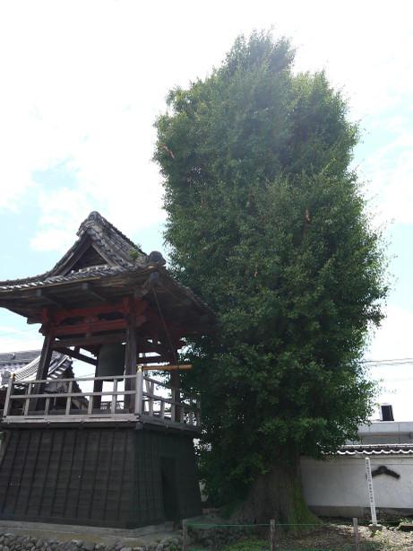 20120801_jyousenji_icyou