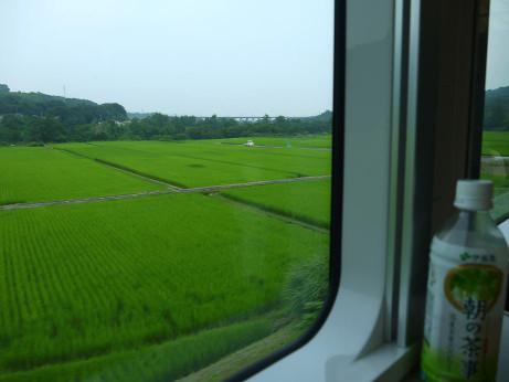 20120807_yamadori11