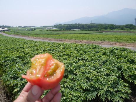 20120810_marukajiri2