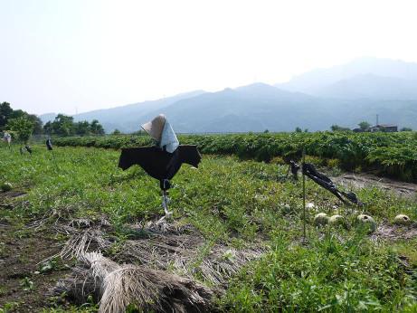 20120811_kakashi