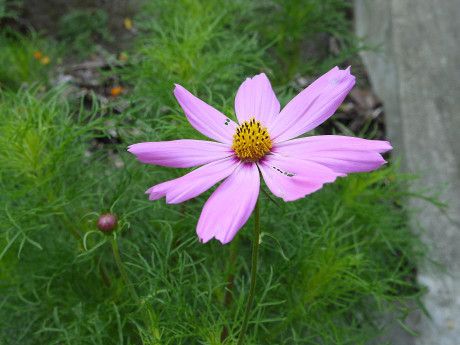 20120814_flower