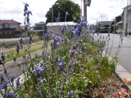 20121004_flower