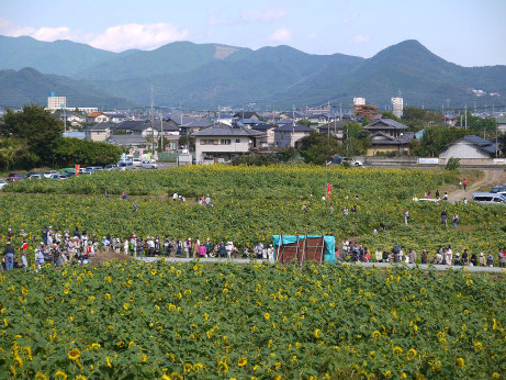 20121015_himawari_batake