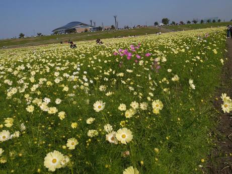 20121021_kosumosu5