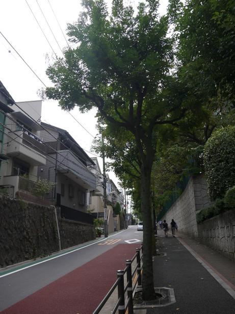 20121103_minehara_douri