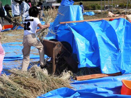 20121112_kodaimai