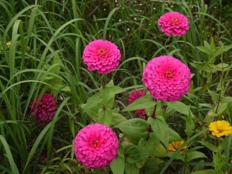 20121114_flower