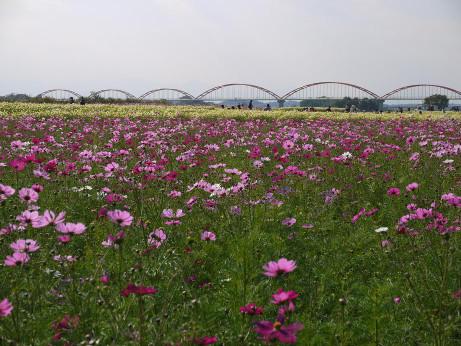 20121123_suikankyou1