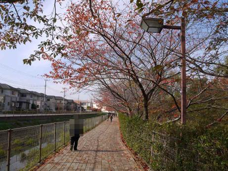 20121128_kandori_park_1