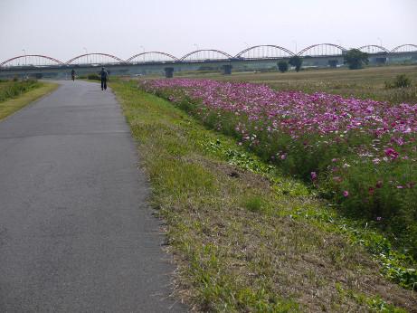 20121129_arakawa_zutsumi3