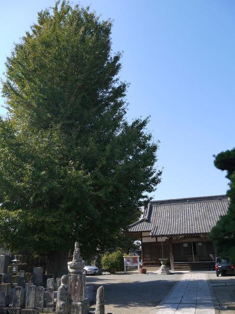 20121129_touyouji_2