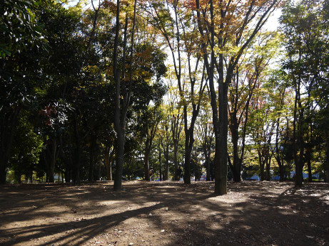 20121211_matsuba_park