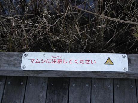 20121221_mamushi