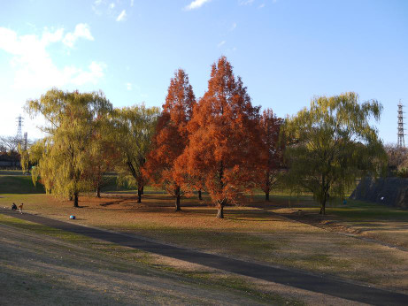 20121222_metasequoia3