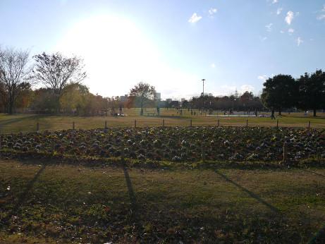 20121223_oomiya_3park_2