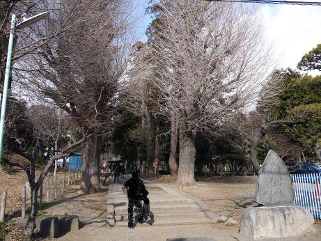 20130205_miyoshino_jinjya1