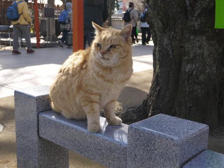 20130211_cat1