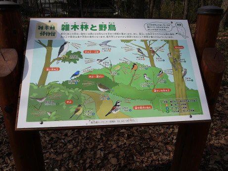 20130228_higashiyamato_park_bird