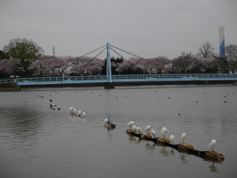 20130402_bird