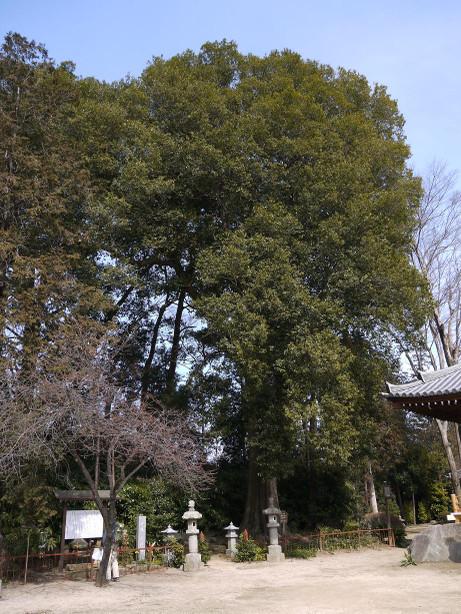 20130411_shirakashi