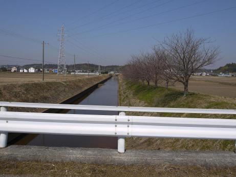 20130419_sakura_namiki