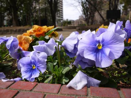 20130424_flower1
