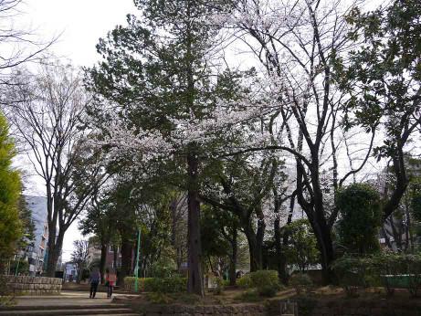20130424_tokiwa_park2