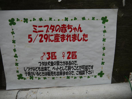 20130612_buta_annai