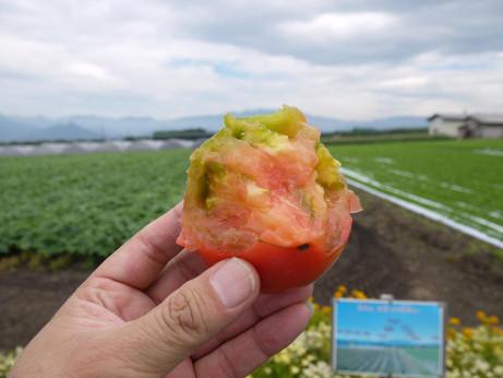 20130812_tomato2