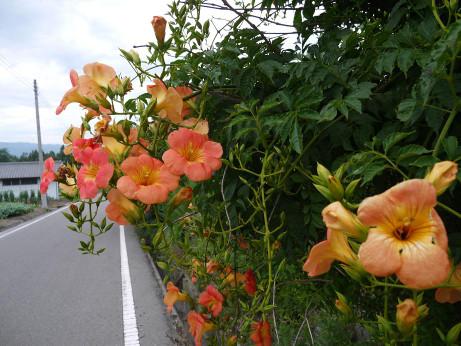 20130913_flower