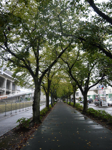 20131018_road03
