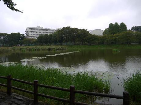 20131022_sirahatanuma1