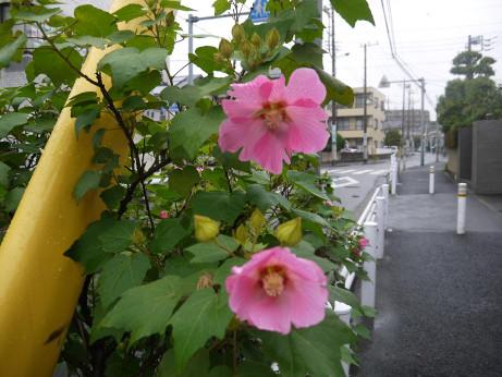 20131024_flower