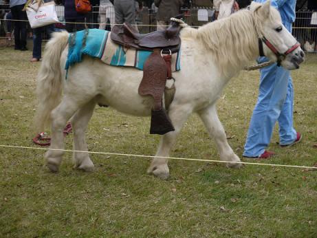 20131104_pony
