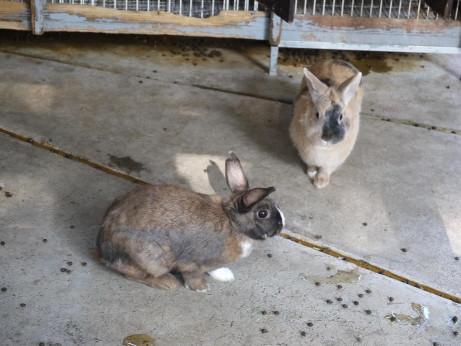 20131122_rabbit