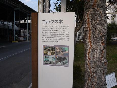 20131125_korukunoki