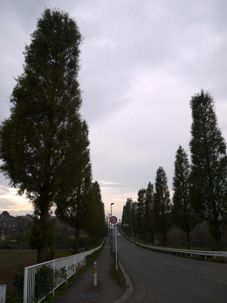 20131213_namiki05