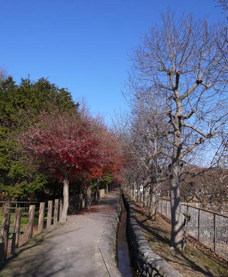 20131225_heirinjibori6