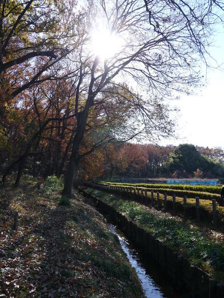 20131226_ryokudou4