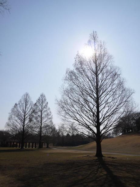 20140128_tree1
