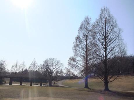 20140128_tree6