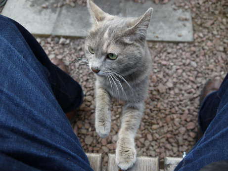 20140208_cat