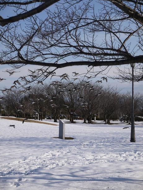 20140211_snow07