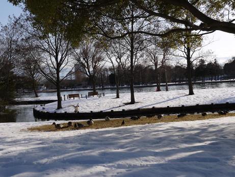 20140211_snow12