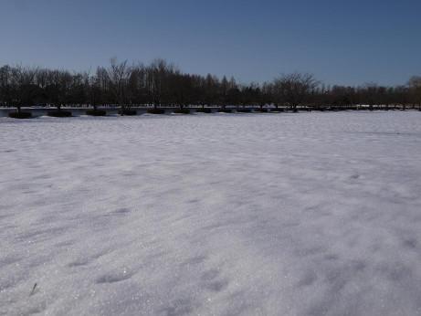 20140211_snow14