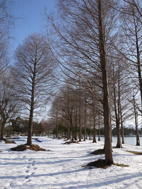 20140211_snow18