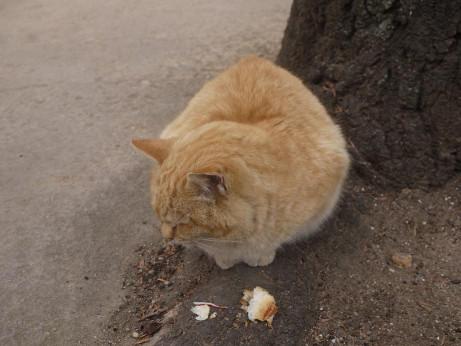 20140214_cat