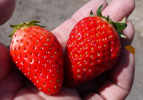 20140227_strawberry