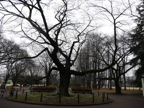 20140306_tree